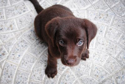 50+ Brown Dog Names for Chocolate Puppies – Pick the Best!