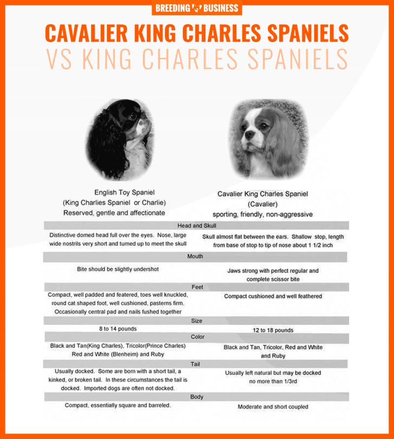 cavalier king charles spaniels vs king charles spaniels