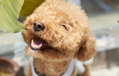 95+ Cool Dog Names with their Meaning – What's Your Favorite?