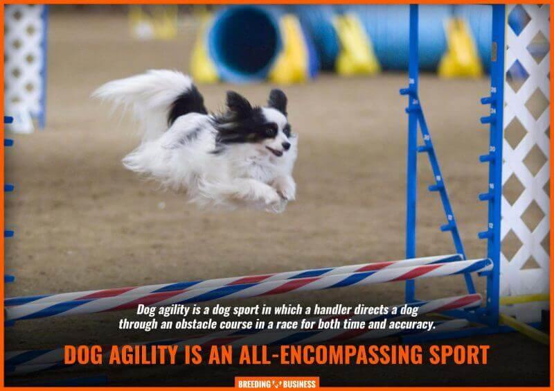dog agility explainer image