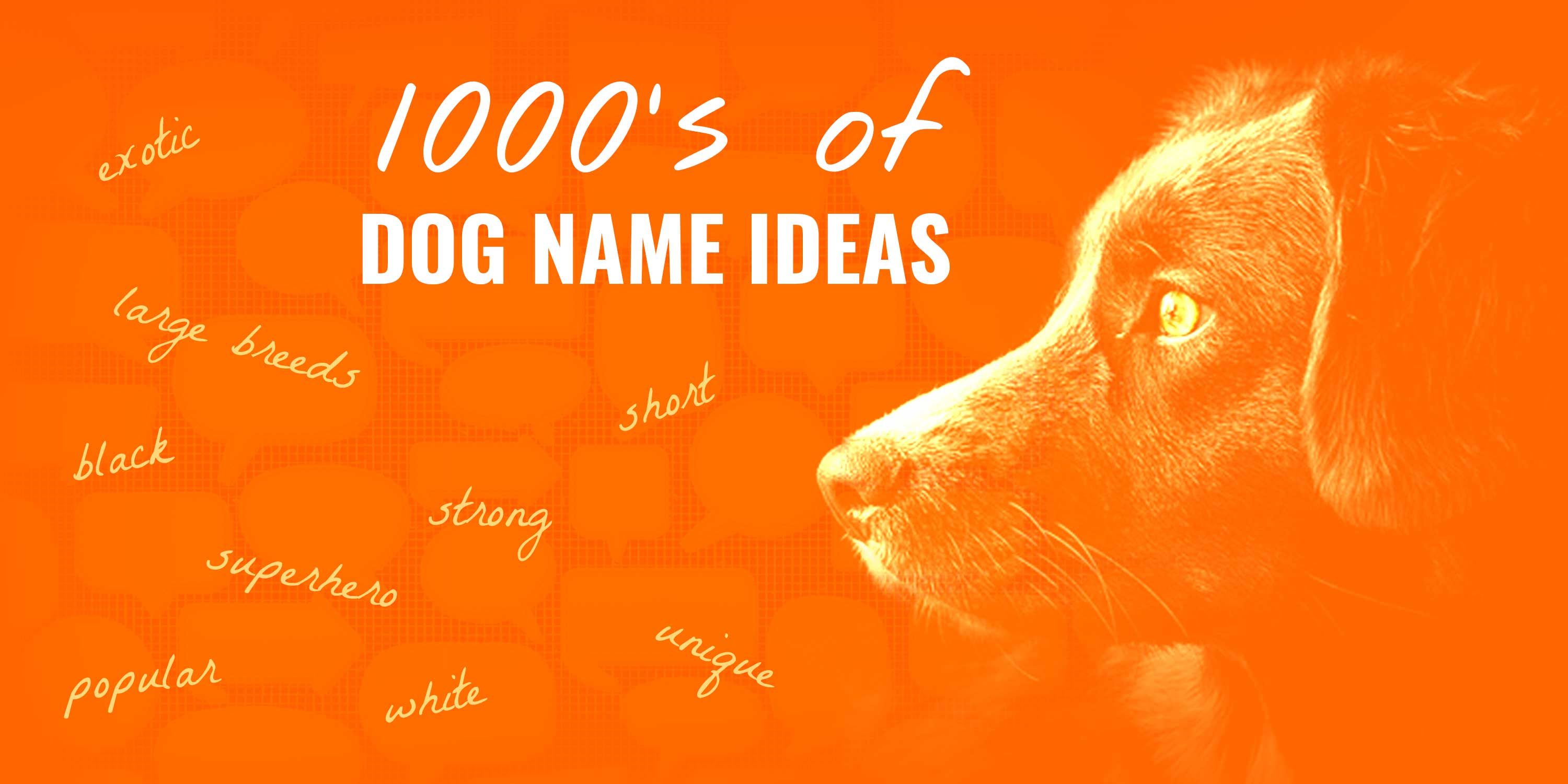 1000's of Dog Names for New Puppy Owners – Dog Name Center