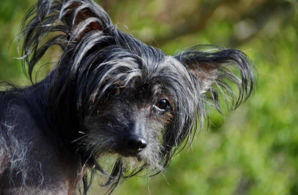 500+ Exotic Dog Names – What's Your Favorite Tropical Puppy