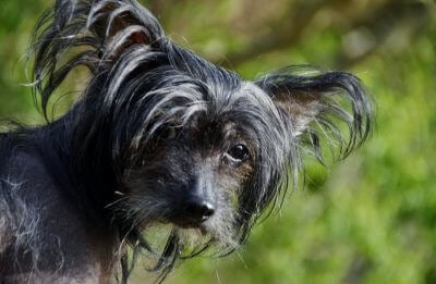 500+ Exotic Dog Names – What's Your Favorite Tropical Puppy Name?