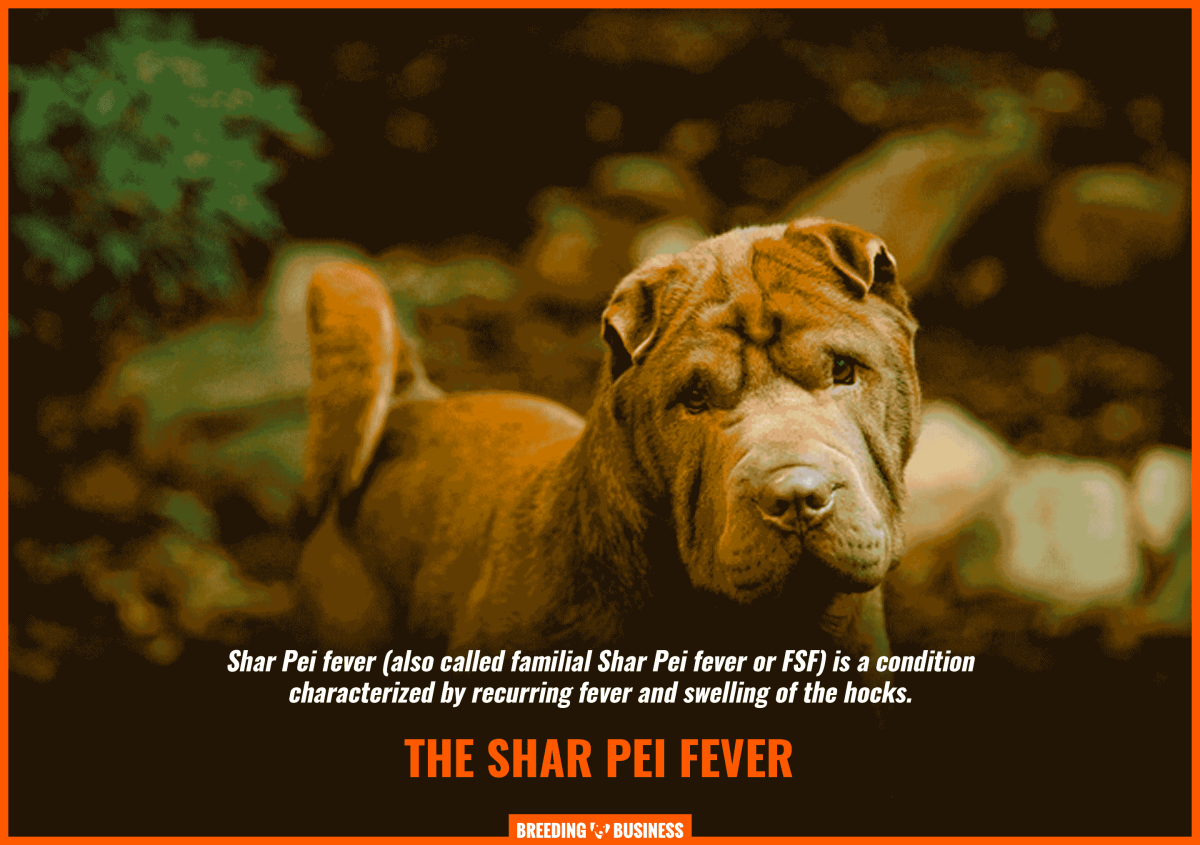 familiar shar pei fever