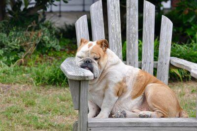 400+ Funny Dog Names – Perfect for Goofy Puppies and Hilarious Dogs!