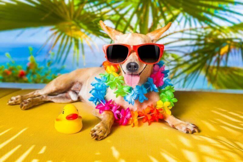 30+ Hawaiian female dog names and meanings ideas