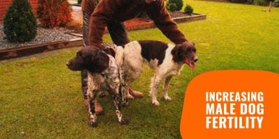 11 Tips to Increase Male Dog Fertility