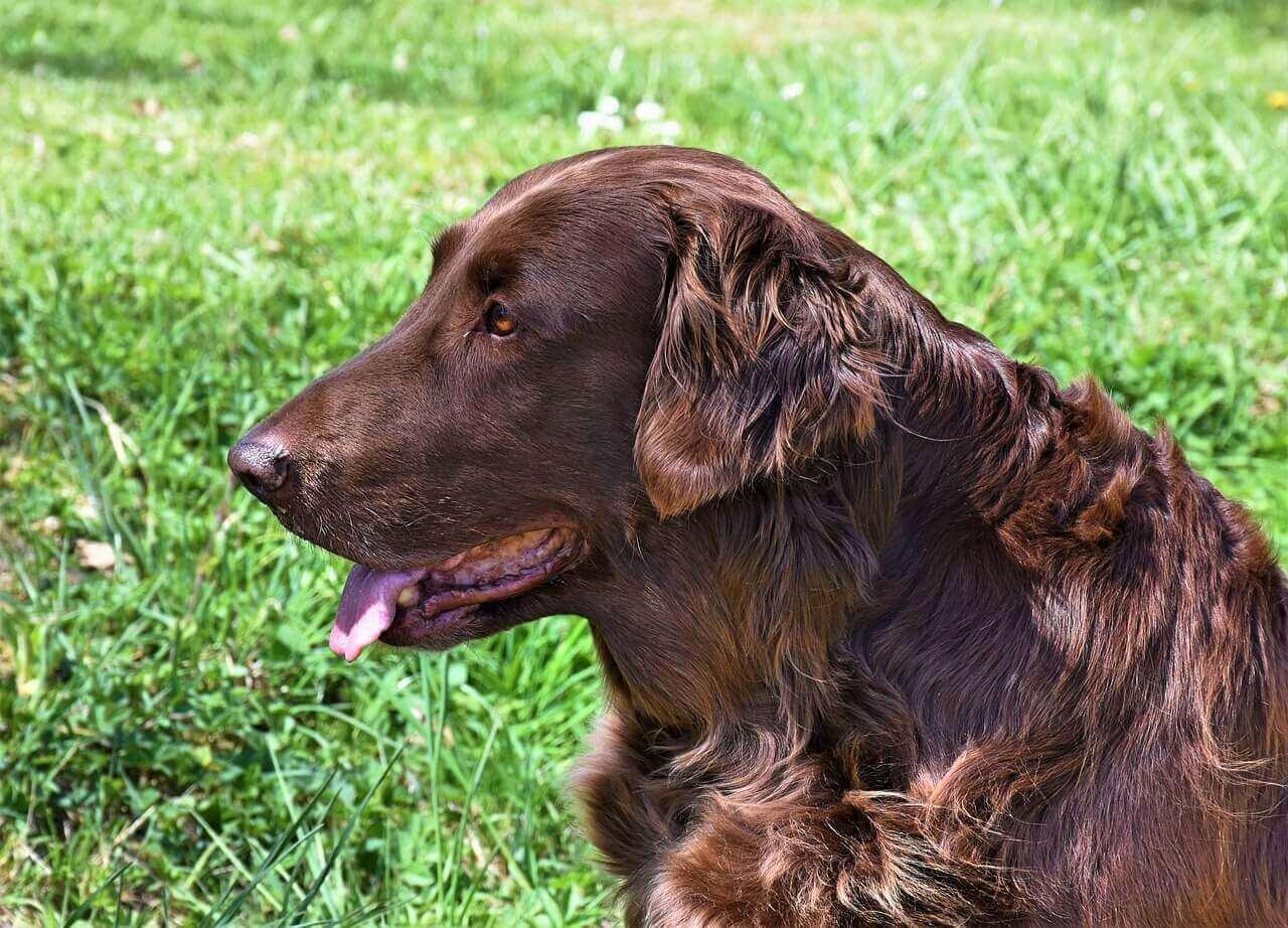 Irish Dog Names – Over 150 Ireland-Inspired Ideas For Puppy
