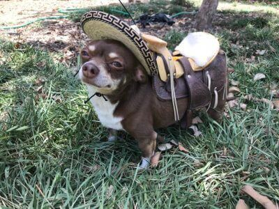 170+ Mexican Dog Names – Inspired by Food, Places & People