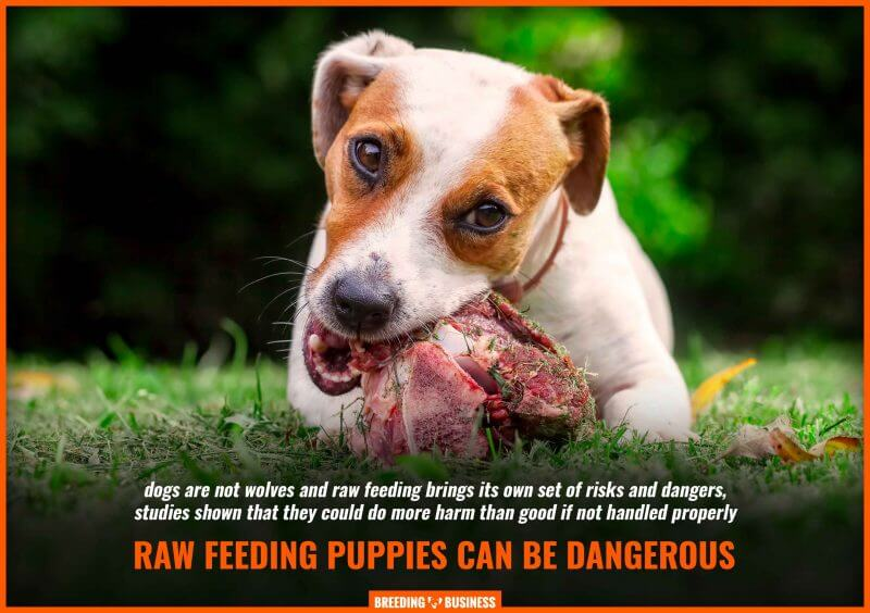 raw feeding puppies dangers and risks