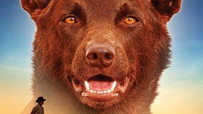 99+ Red Dog Names for Superb Ginger & Orange Puppies