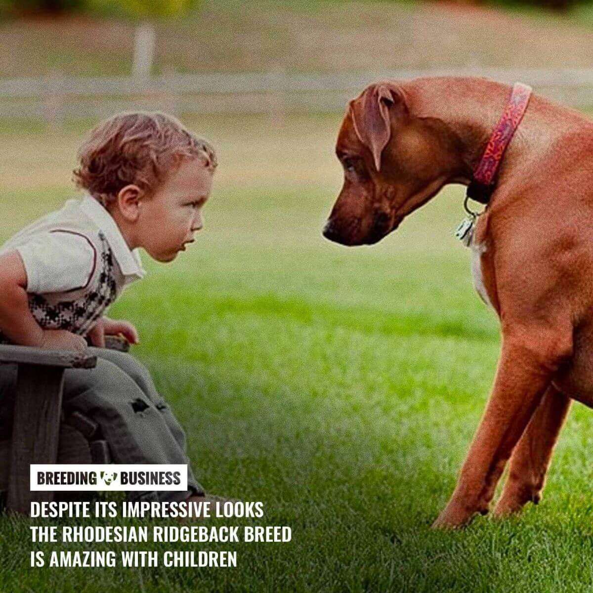 rhodesian ridgeback with children
