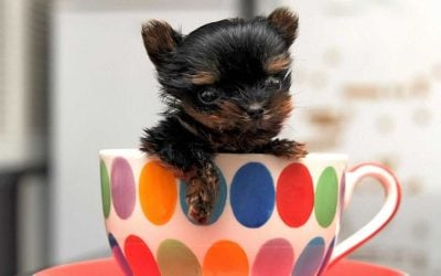 250+ Small Dog Names – Perfect Ideas for Tiny, Teacup & Toy Dogs!