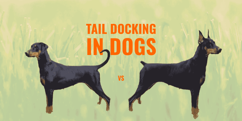 tail docking in dogs