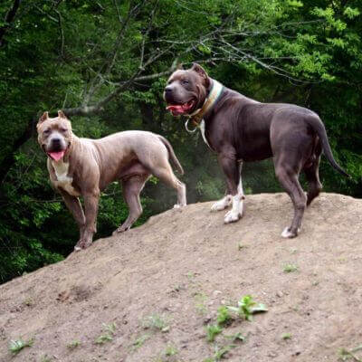 75+ Tough Dog Names – Amazing Ideas for Fierce & Strong Dogs