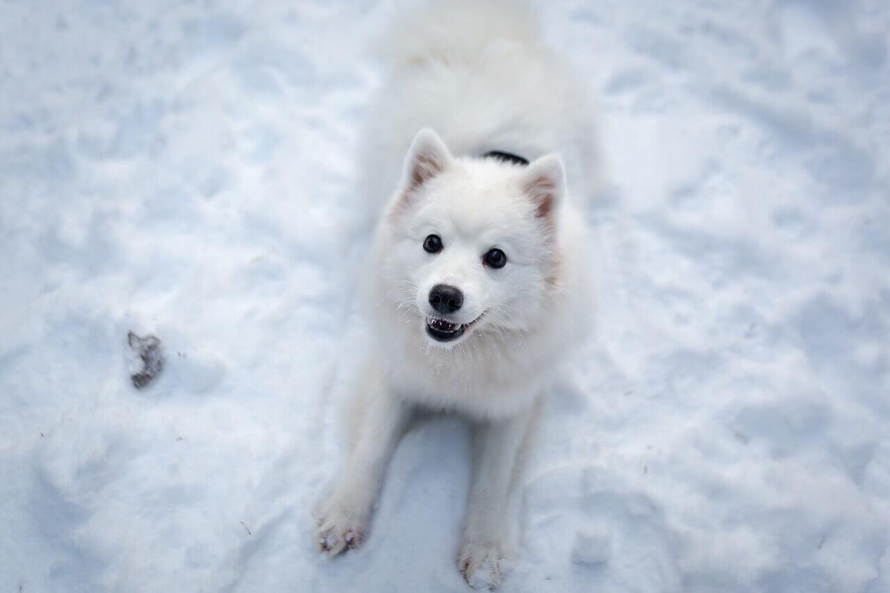 White Dog Names – Over 150 White, Snow & Ice-Inspired Ideas