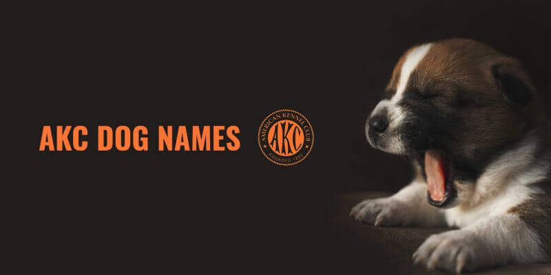 AKC Dog Names – Requirements, Name Check, Ideas & Renaming