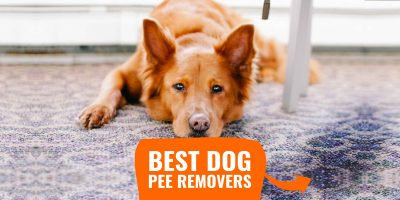 best dog pee removers