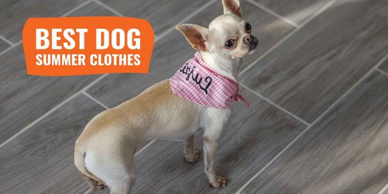 best dog summer clothes