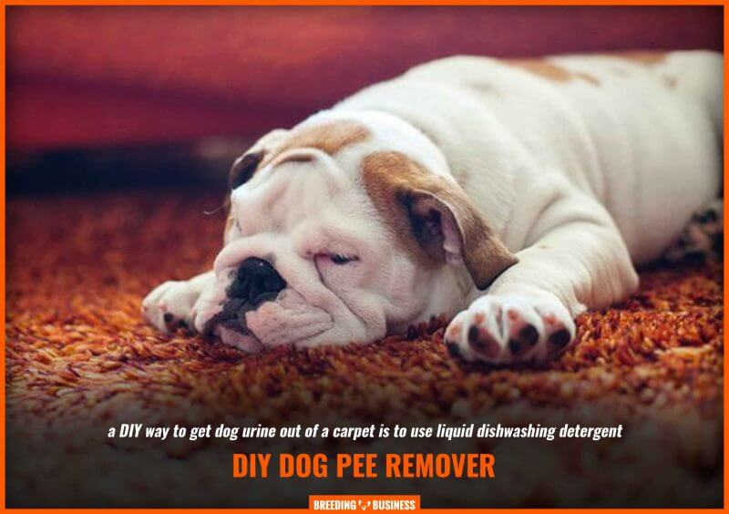 diy dog pee remover