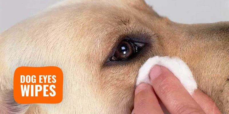 10 Best Dog Eye Wipes – Ingredients, Prices, Use Cases & Reviews