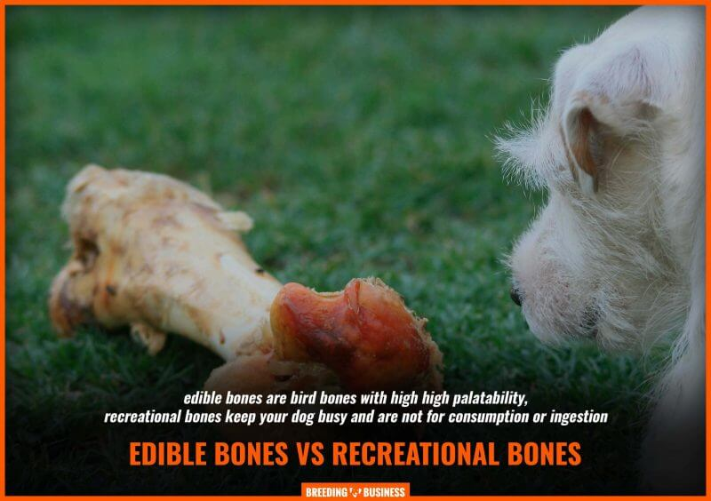 edible vs recreational raw bones for dogs