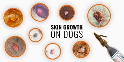 Skin Growths on Dogs – Types, Causes, Diagnosis, Prevention & Treatments