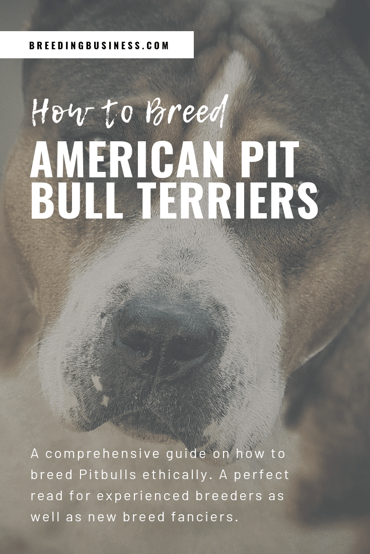 how to breed American Pit Bull Terriers (poster)