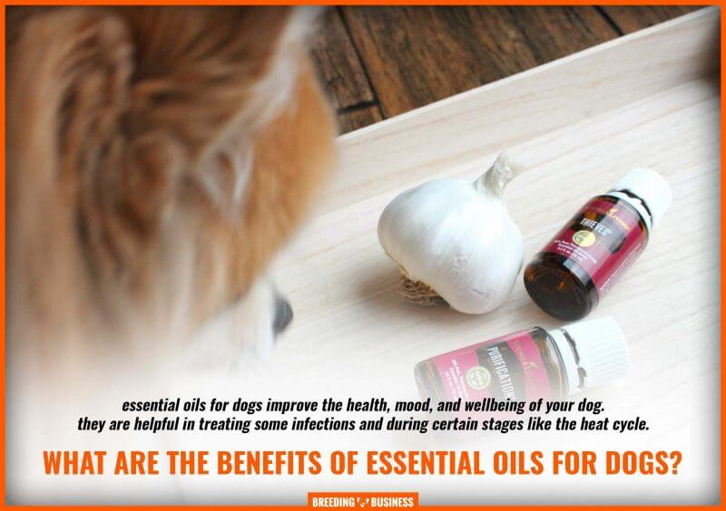benefits of essential oils for dogs