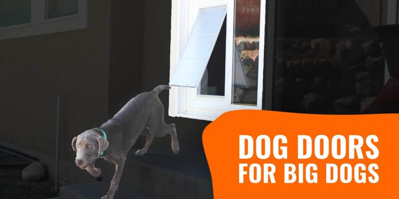 Best Dog Doors for Big Dogs