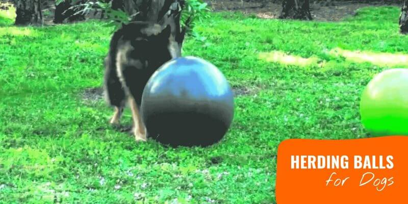 10 Best Herding Balls for Dogs – Reviews, Materials, Durability & Sizes