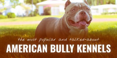 best american bully kennels