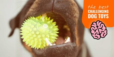 10 Best Challenging Dog Toys w/ Buying Guide