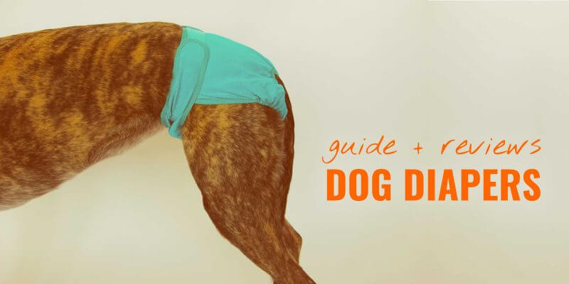 10 Best Dog Diapers – When To Use, Reviews & FAQ