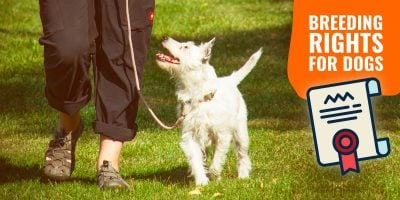Breeding Rights for Dogs – Definition, Paperwork & Warning