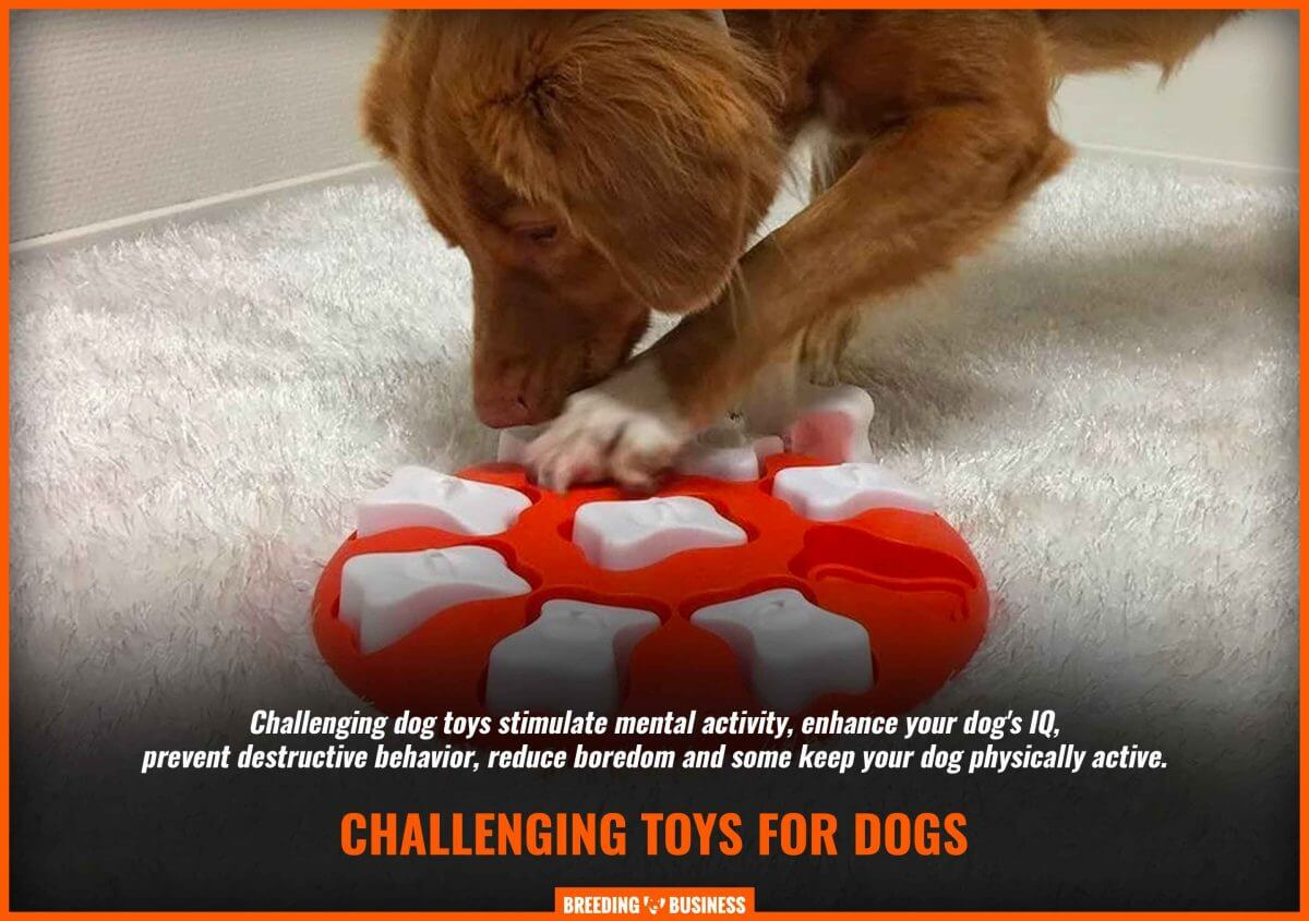 definition of challenging dog toys