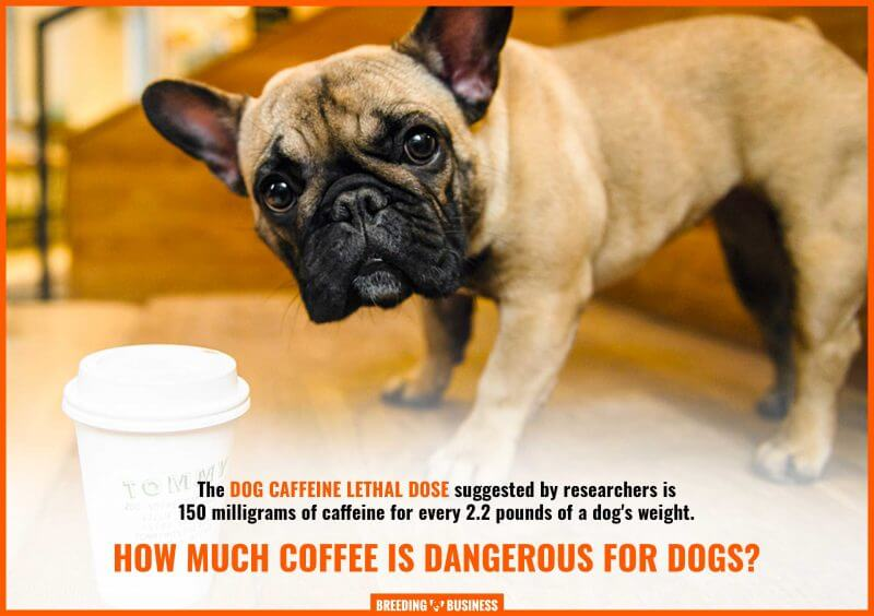 coffee dosage for dogs