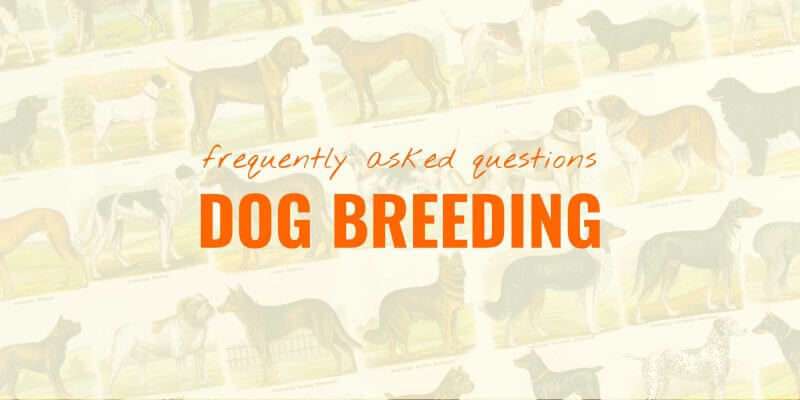 Questions About Dog Breeding