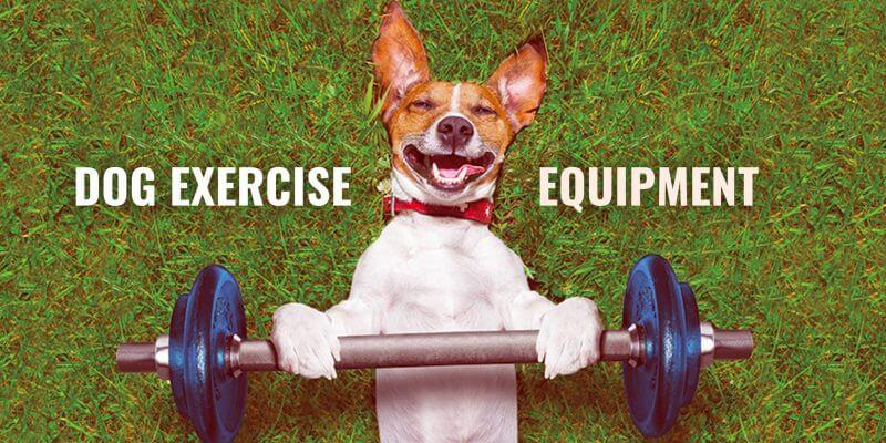 dog exercise equipment and dog workout kit