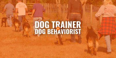 dog trainer vs dog behaviorist