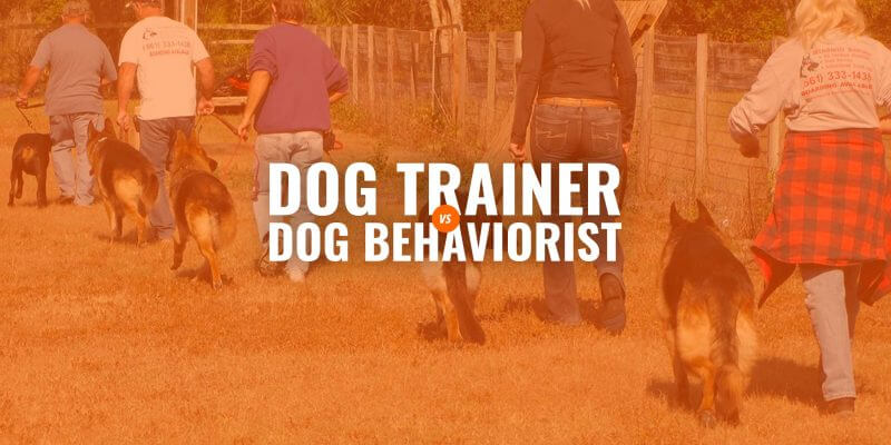 dog trainer vs dog behaviorist
