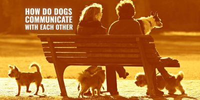 how do dogs communicate with each other