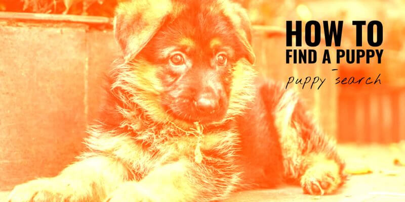 puppy search (guide)
