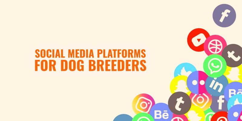 The Best Social Media Platforms For Dog Breeders