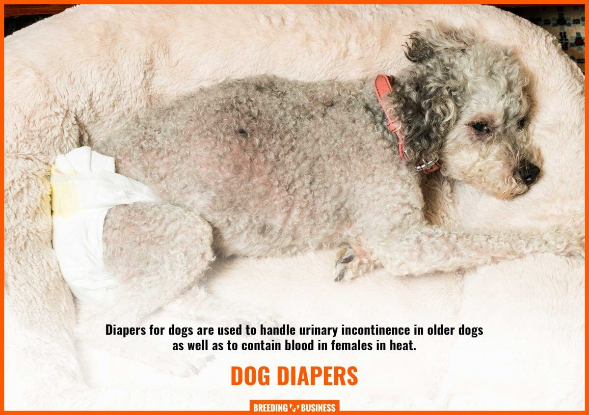 using diapers for dogs