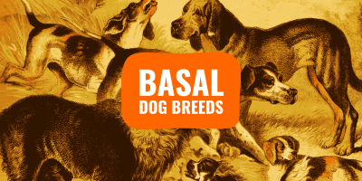 basal dog breeds