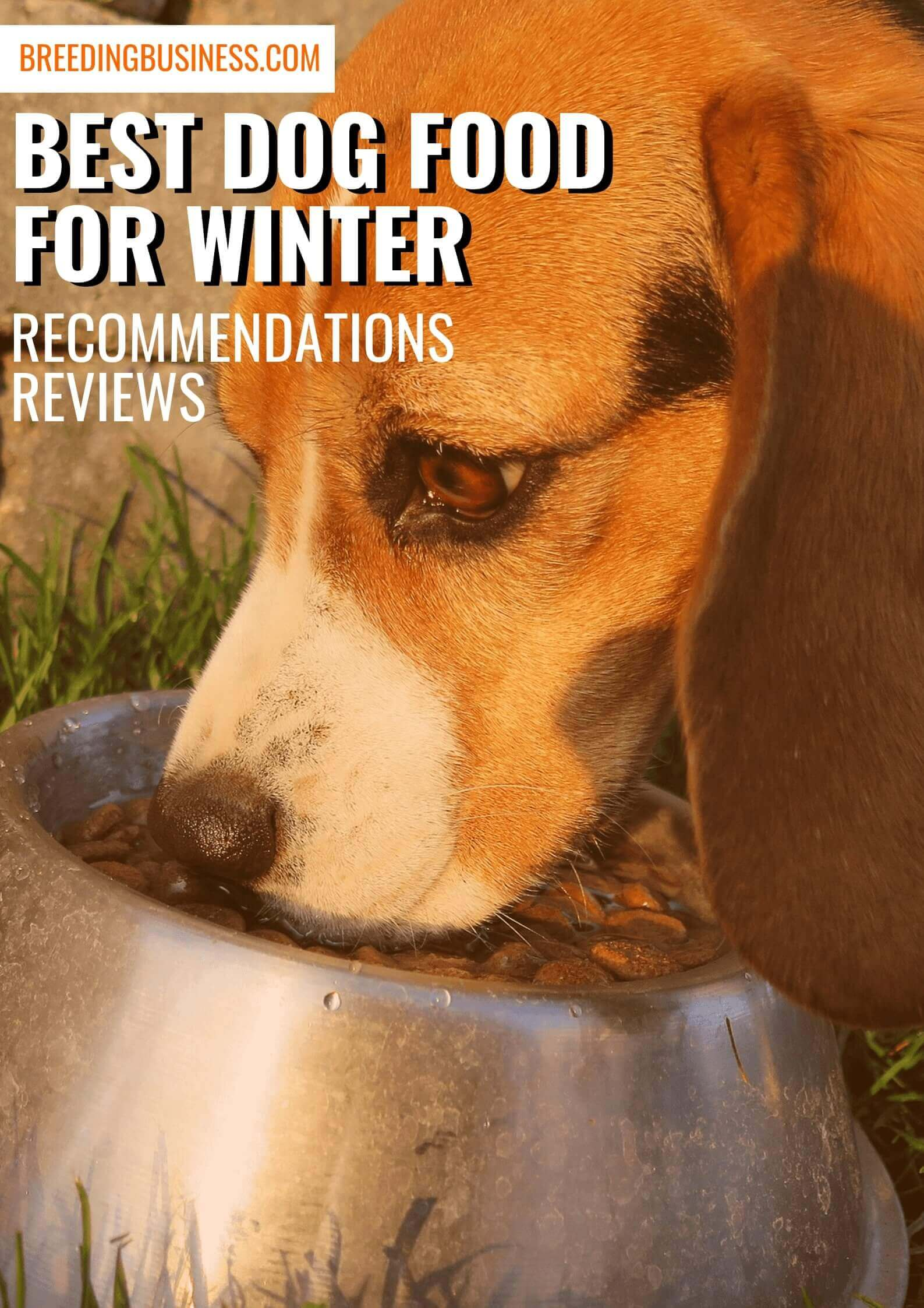 most suitable dog foods for wintertime