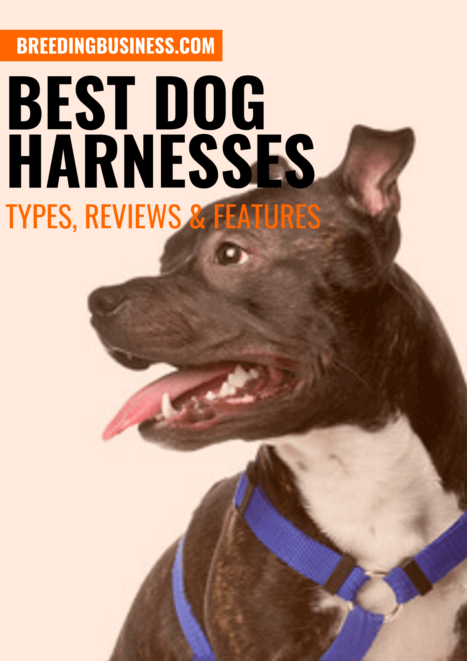 Best Dog Harnesses – Types, Reviews & Top Features