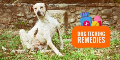 best dog itching remedies