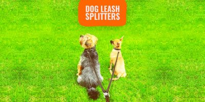 10 Best Dog Leash Splitters – Guide, Reviews & FAQ